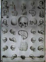 Phrenology Chart on silk c1890.